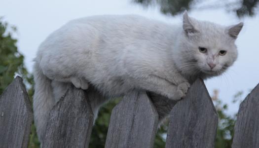 кошка, кот, животные