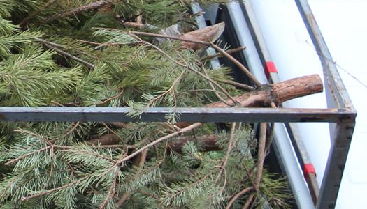 елки, деревья, вырубка