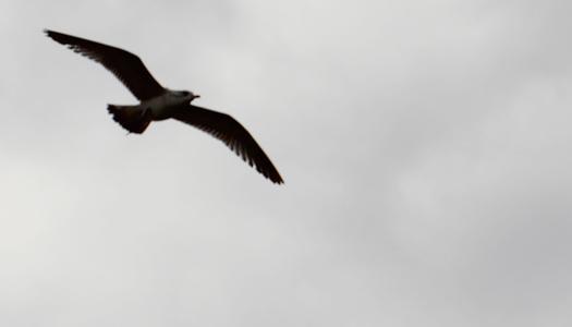 небо, птица