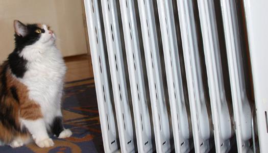 отопление, кот, кошка, животные,тарифы