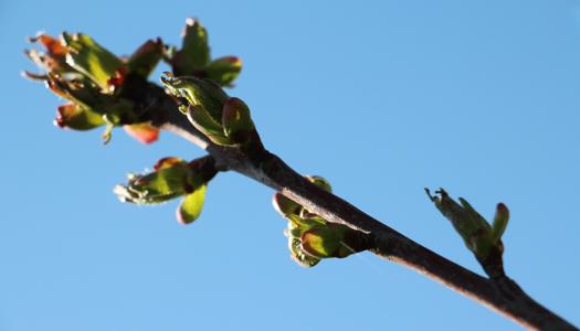 дерево, погода, весна