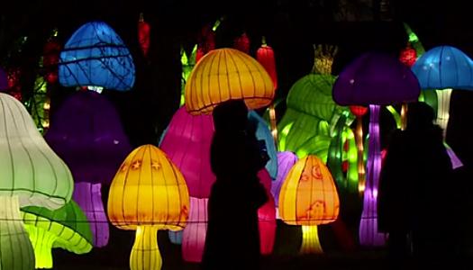 Зажгли более 10 тысяч лампочек: в Эстонии стартовал яркий фестиваль фонарей (ФОТО)
