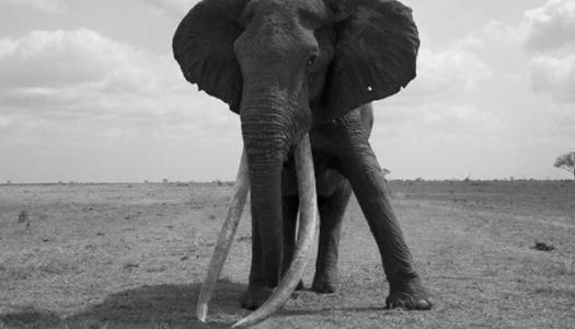 слон, животные