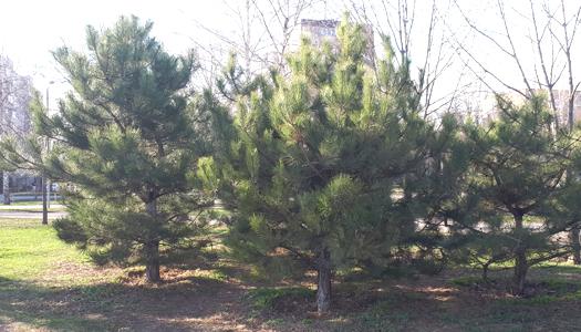 елки, деревья