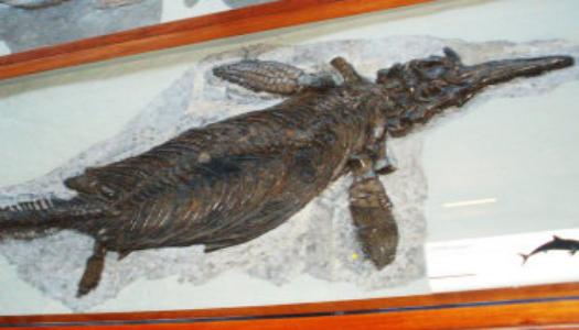 У США знайдено останки вагітної самки іхтіозавра