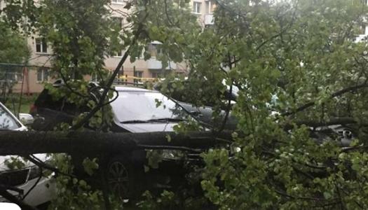 дерево на авто, стихия, буря