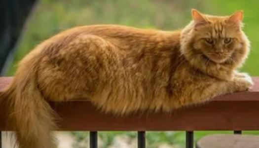 В Великобритании умер самый старый в мире кот