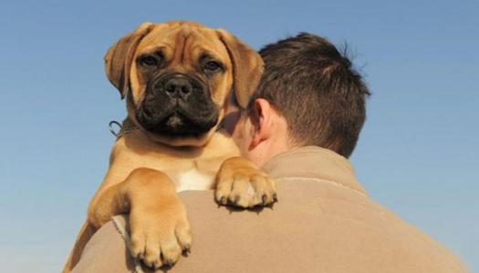 Больным диабетом рекомендуют завести собаку